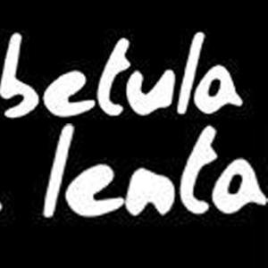 Betula Lenta